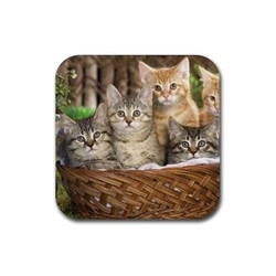 Tabby kitty kitten cat cats 2 rubber coaster  square 2