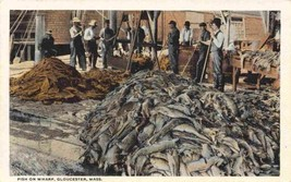 Fish Catch on Wharf Gloucester Massachusetts 1920c postcard - $6.44