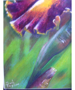 original drawing pastel color pencil iris up close floral - $29.99