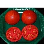 Celebrity Hybrid Tomato seedsbulk 50 pkt. Heavy producercompact Plant - $4.99