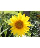 My Flower Garden - $0.00