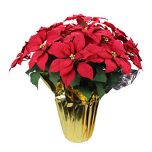 """27.25"""" Red Artificial Christmas Poinsettia with Gold Wrapped Pot - tkchr... - $61.95"""