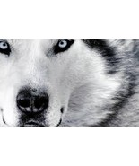 ULTIMATE PASSION WOLF SPELL,SHAMANIC SPIRITS POWERS OF THE MOST POWERFUL ANIMAL  - $25.00