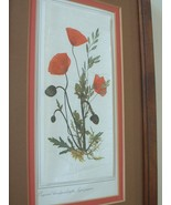 Framed Double Matted Ready to Hang Floral Print - $16.00
