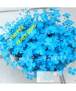100 Pcs / Bag Blue Clover Seeds Bonsai Flower Seeds Home Garden Four Leaf - $4.85