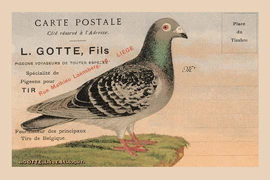 Pigeons Voyageurs - Art Print - $19.99 - $179.99