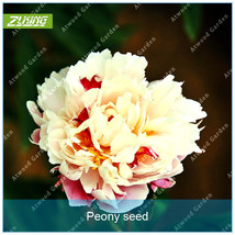 10pcs Herbaceous Peony Seed Flower Seeds Bonsai Plants For Home Garden S... - $4.21