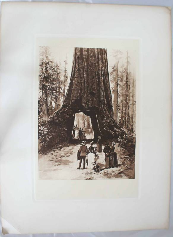 Giant Sequoia Tunnel by Henry Phleferd 1889 Lithograph