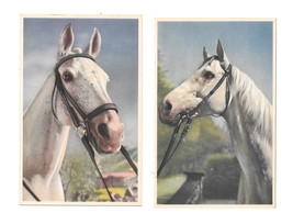 2 Vintage Alfred Mainzer Postcards 354 355 Thoroughbred Horses  - $6.69