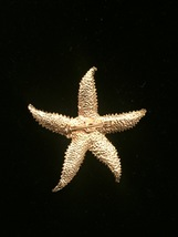 Vintage 80s gold tone etched starfish brooch image 3