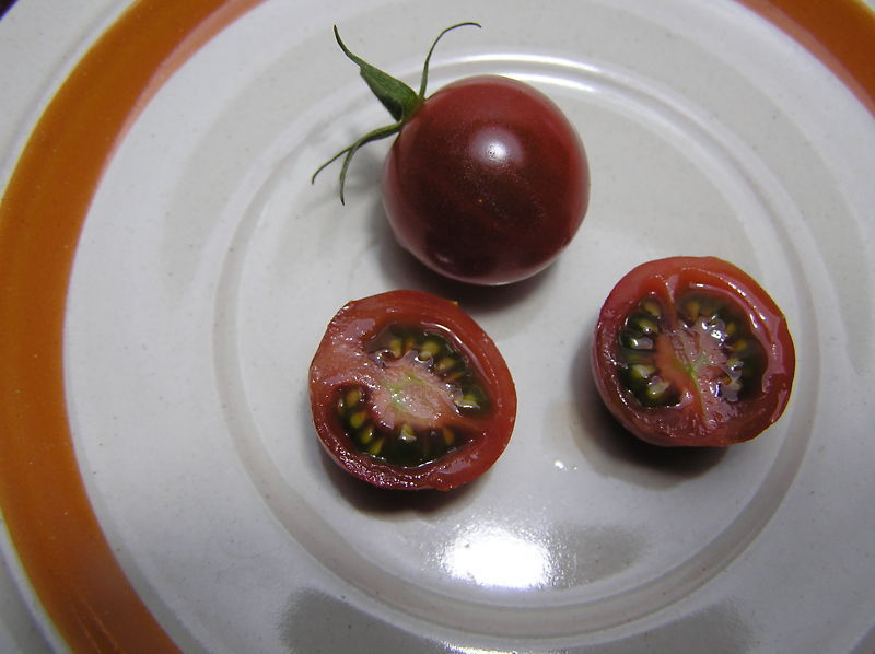 Ambrosia Red, a sweet and spicy cherry tomato
