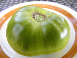 Cherokee Green Tomato - wonderful green-when-ripe cousin to Cherokee Purple - $4.05