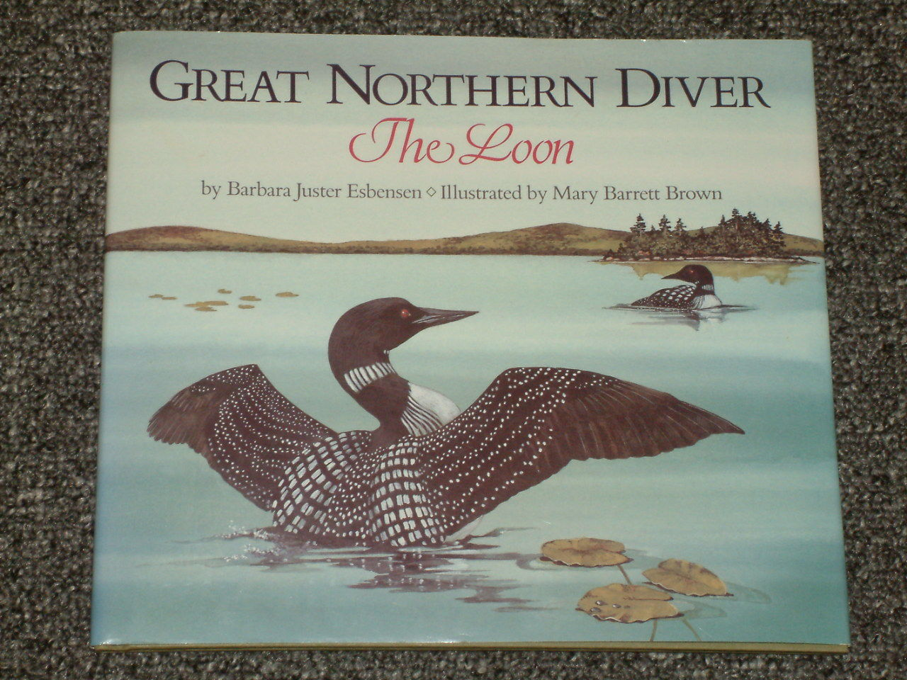 Great Northern Diver The Loon Barbara Juster Esbensen HB DJ
