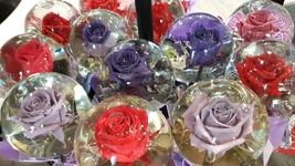 Real Authentic Rose in Water Globe- Real Rose FREE EXPEDITED SHIPPING SA... - $39.59