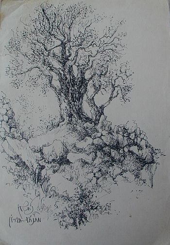 Primary image for Olive tree