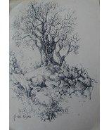 Olive tree - $300.00