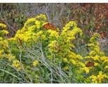 Efn plants 028 thumb155 crop