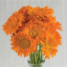 Alpha Organic Calendula Seeds Edible Flower Seeds - $8.99