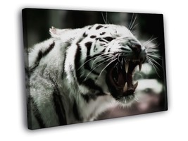 White Tiger Roar Fang Animal Nature Framed Canvas Print - $14.96+