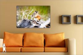 Chipmunk Photo, Baby Shower Gift, Kids Room Art, Cute Animals, Nursery D... - $30.00+