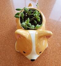 "Corgi Dog Planter + Succulent, String of Beads, 5"" Puppy pot, curio herreianus image 3"