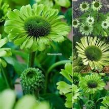 Neue nette entzückende Blumen wohlriechende Blüte weiße Lotos ElR8 - $2.00
