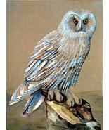 156016 snowy owl thumbtall