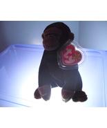 Congo Ty Beanie Baby MWMT 1996 - $12.99