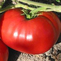 Tomato Seeds - Delicious - Vegetable Seeds - Outdoor Living - Garden -FREE SHIPP - $41.99+