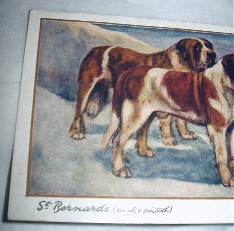 Used PC Printed England-ST. BERNARDS(Rough,Smooth)G.Vernon S