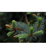 Evergreen #1, 10x15 Photograph - $179.00