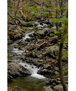 Stream In The Woods at Shenandoah National Park, Va, 12x18 Photograph - $199.00