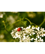 Ladybug, at Shenandoah National Park, Va, 10x15... - $179.00