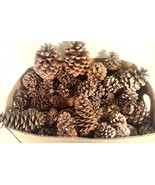 LARGE BOX OF REAL PINE CONES 8 LBS. FOR CRAFTS CHRISTMAS DECOR VARIOUS S... - $22.95