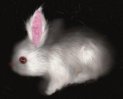 FURRY WHITE BUNNY RABBIT