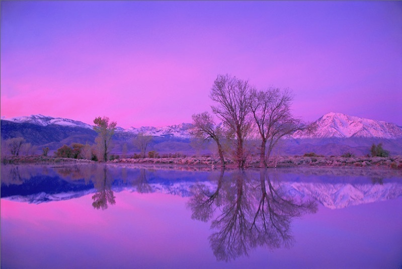 Winter pond reflection