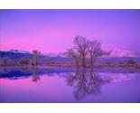 Winter pond reflection thumb155 crop