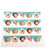 USPS Seashells Postcard Stamps. Sheet of 20. - £6.85 GBP