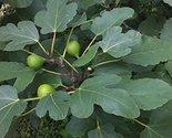 51q f0vspvl. sl1500  thumb155 crop