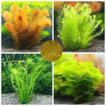 500 Pcs / Bag Ceratophyllum Seeds Indoor Beautifying Aquarium Grass Plan... - $4.76