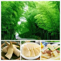 50 Chinese Bamboo Seeds,Ornamental and edible Plant , rich in Dietary fiber - $7.55