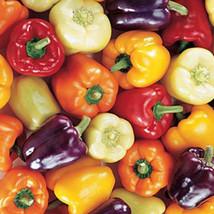 Mini Bell Pepper Seeds - 20+ Rare Non-GMO Organic Heirloom Garden Seeds - $7.95
