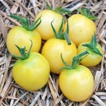 25 Whitest Cherry Tomato Seeds-1199 - $2.98