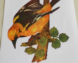 10 gold oriole thumb155 crop