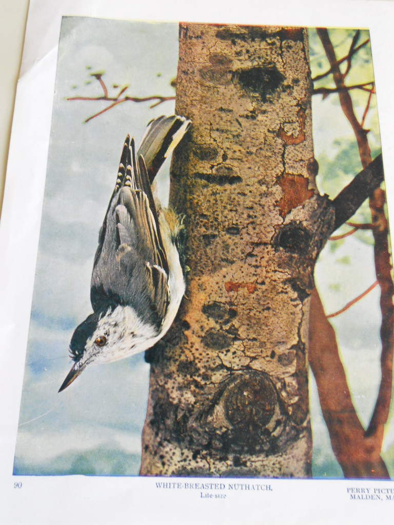 Bird prints Perry Pictures  set of 3