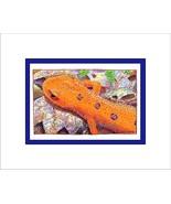 Red Eft Ink Matted Print, Amphibian, Salamander - $24.00