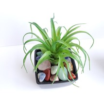 Faux Air Plant with Natural Polished Stones in Planter, Tumbled Rocks, Airplant image 4