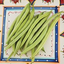 5 lbs Seeds of Provider Bean Conventional & Organic - $54.95