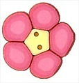 """Tiny Pink Flower 2221t handmade clay button .37"""" JABC Just Another Button C"""