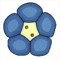 """Small Blue Flower 2222s handmade clay button  .5"""" JABC Just Another Button C"""